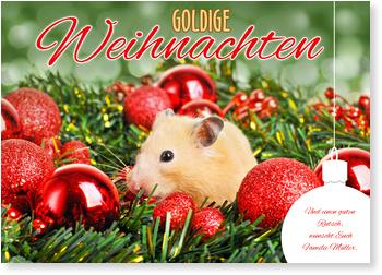 Tierische Weihnachtsgrüße.Goldige Weihnachtsgrüße Weihnachtskarten Tiermotive